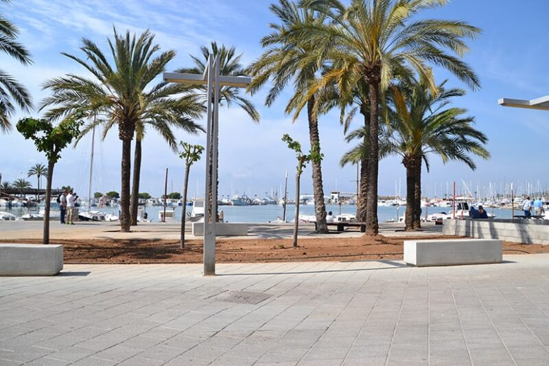 Mallorca palm trees